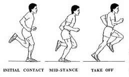 running-gait-cycle-e1332807302905.jpg